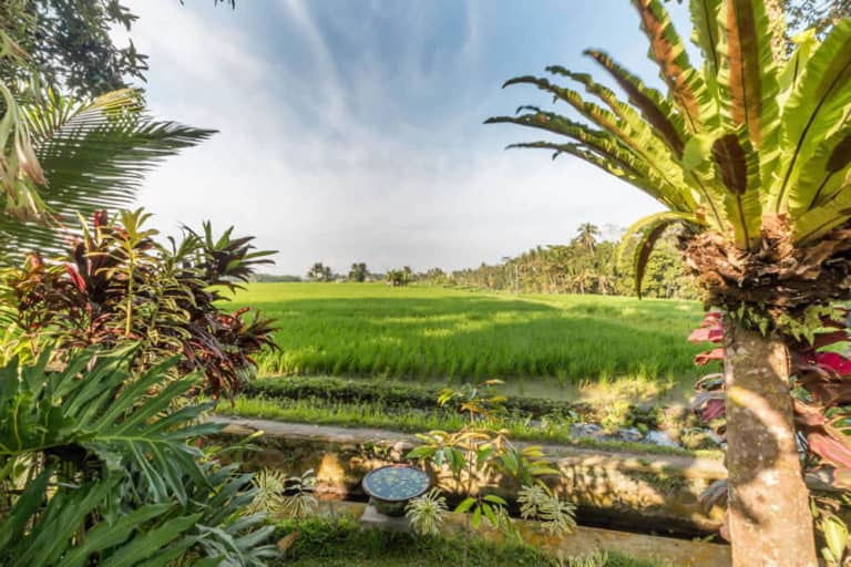 hotel bali mengwi vue riziere