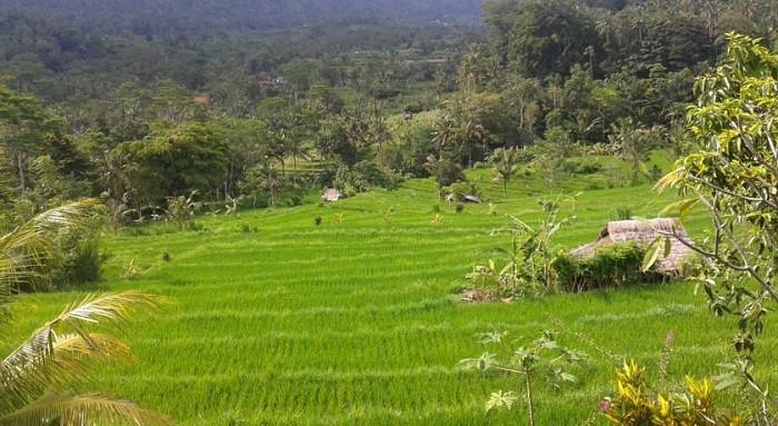 hotel bali sidemen rizières