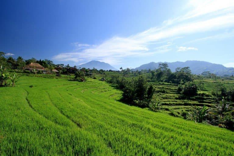 hotel bali sidemen vue rizières