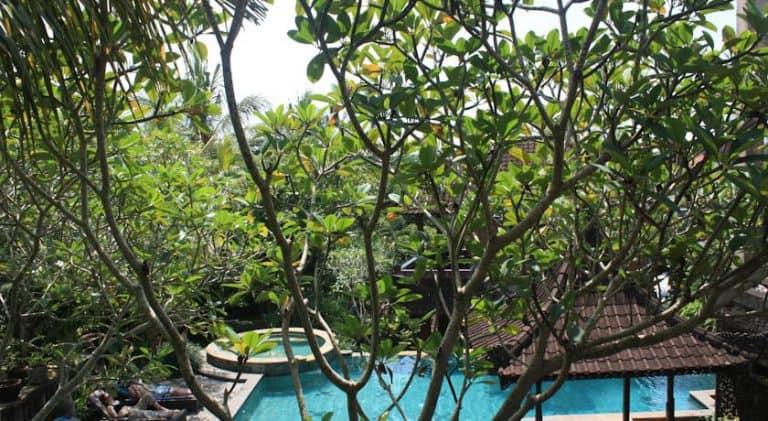 hotel bali ubud piscine et verdure