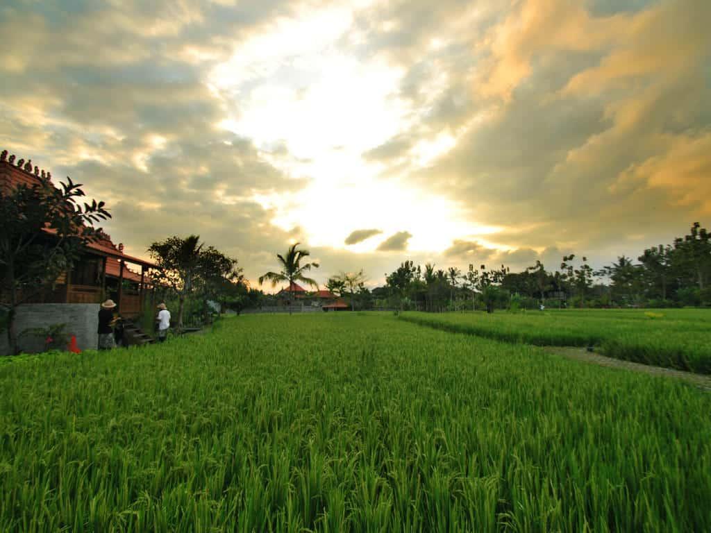 hotel bali ubud vue rizieres panorama