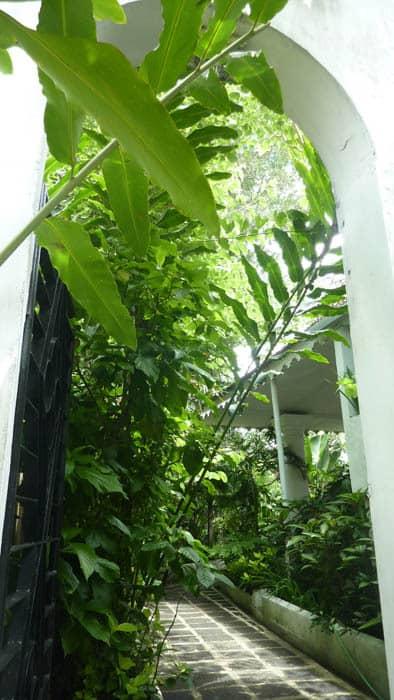 hotel blitar java végétation