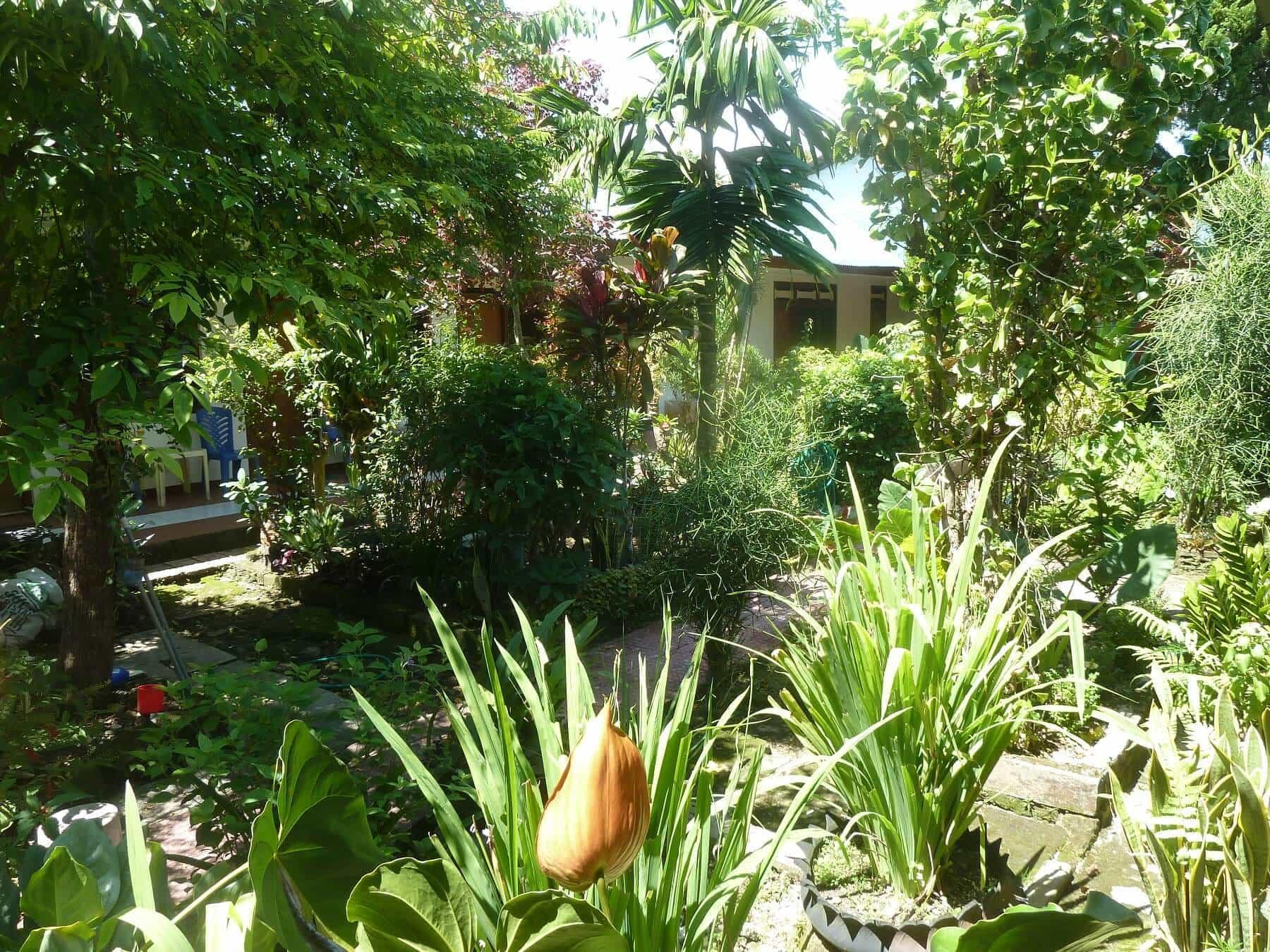 hotel Sumba Waikabubak fleurs