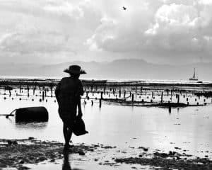 paysage indonésien noir et blanc