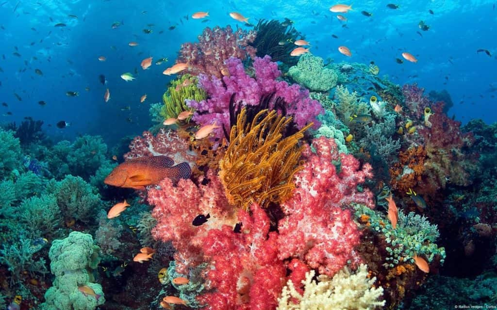 ndonesie papouasie recif corail