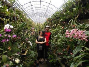 fleurs balinaises serre faune et flores