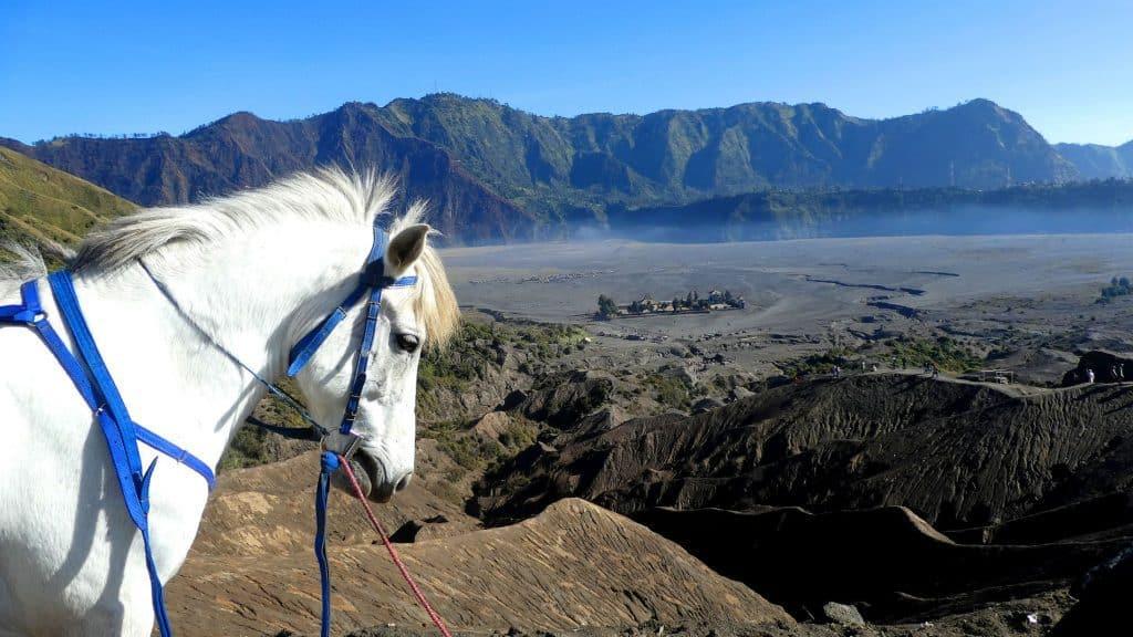 Java bromo sentiers de randonnée avec des chevaux