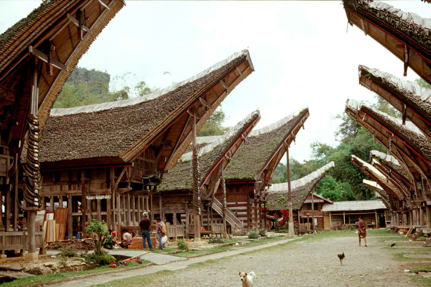kete kesu village authentique sulawesi indonesie