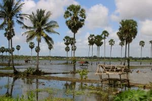Lac tempe sengkang sulawesi indonésie