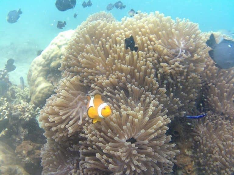 Lombok-plongee