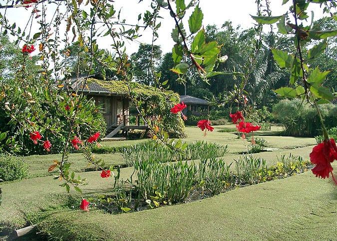 jardin fleuri tomohon