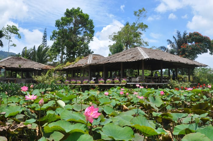 restaurant lotus tomohon