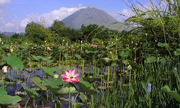 vue volcan lokon lotus