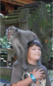 visite forêt des singes ubud