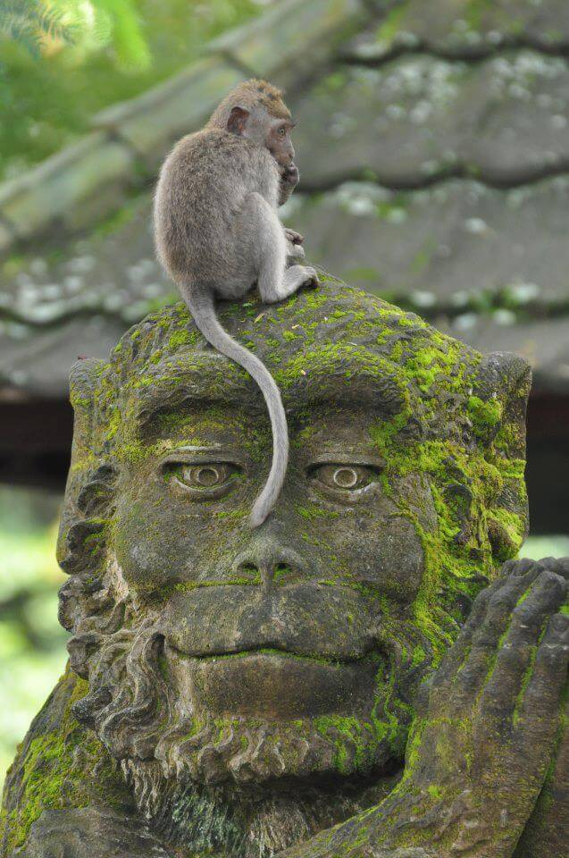 Monkey Forest Bali Ubud singe