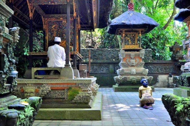 Monkey Forest Ubud Bali Prêtre Prière