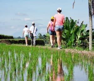 randonnée dans les rizières bali