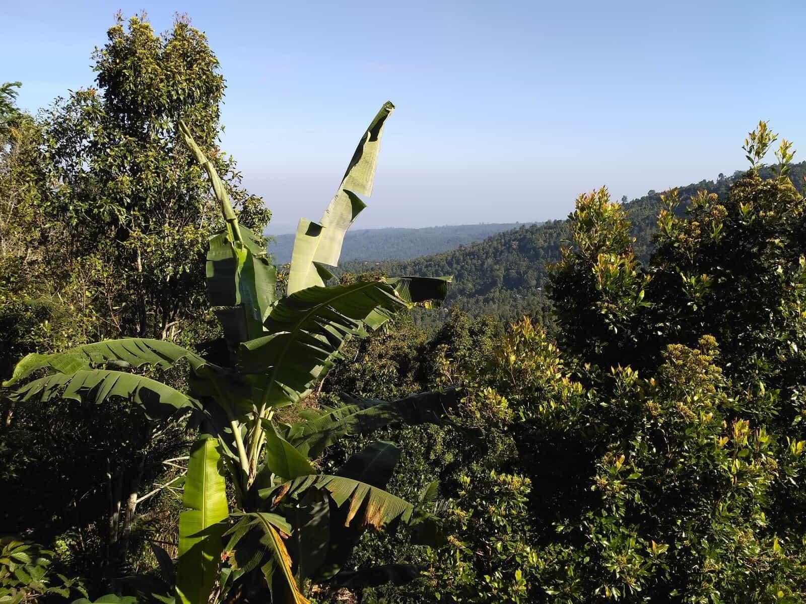 nature Bali Munduk