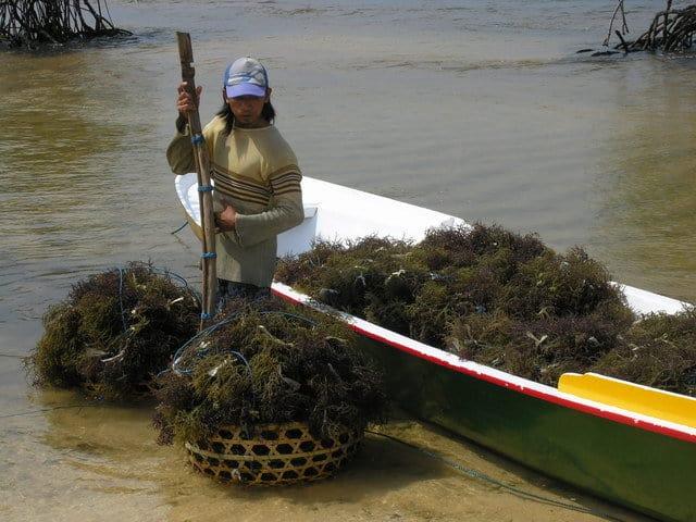nusa lembongan culture algues decouverte