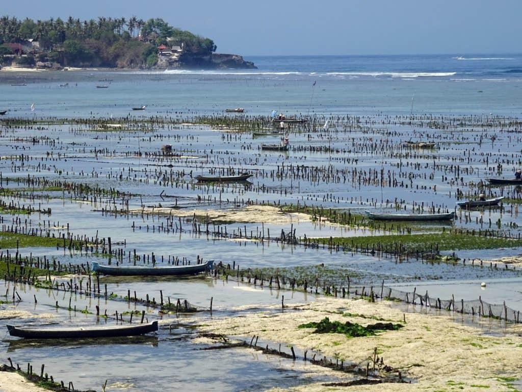 Nusa Lembongan ferme algues Bali