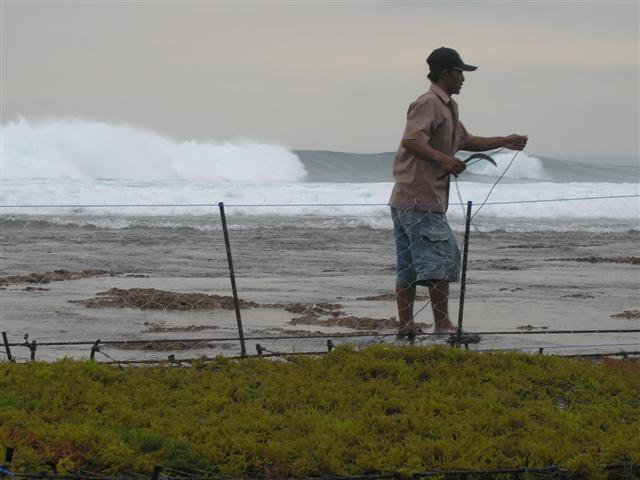 nusa lembongan travailleur algues indonesie