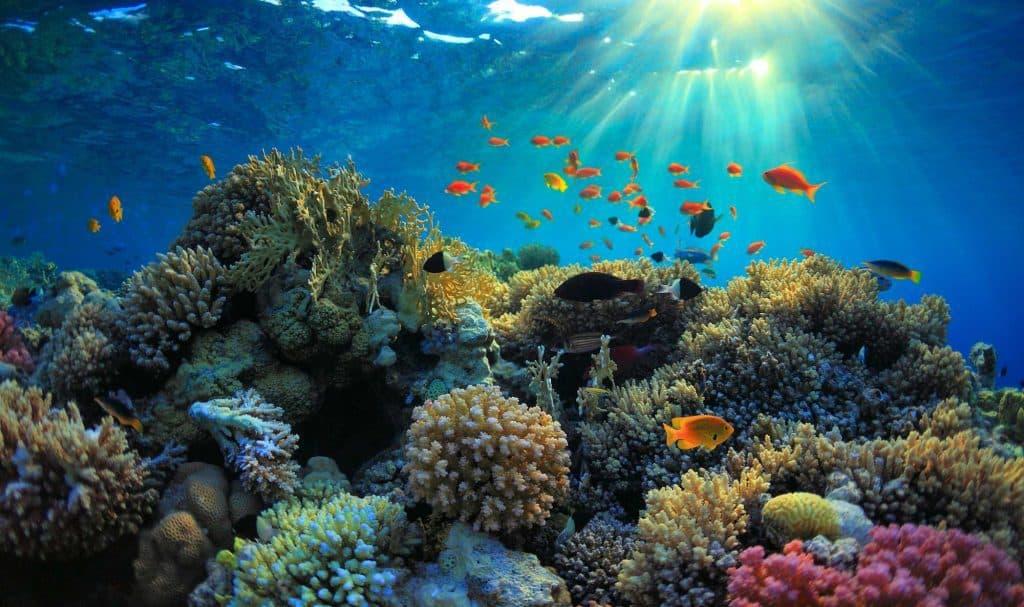 Nusa Lembongan Bali snorkeling paysage sous-marin