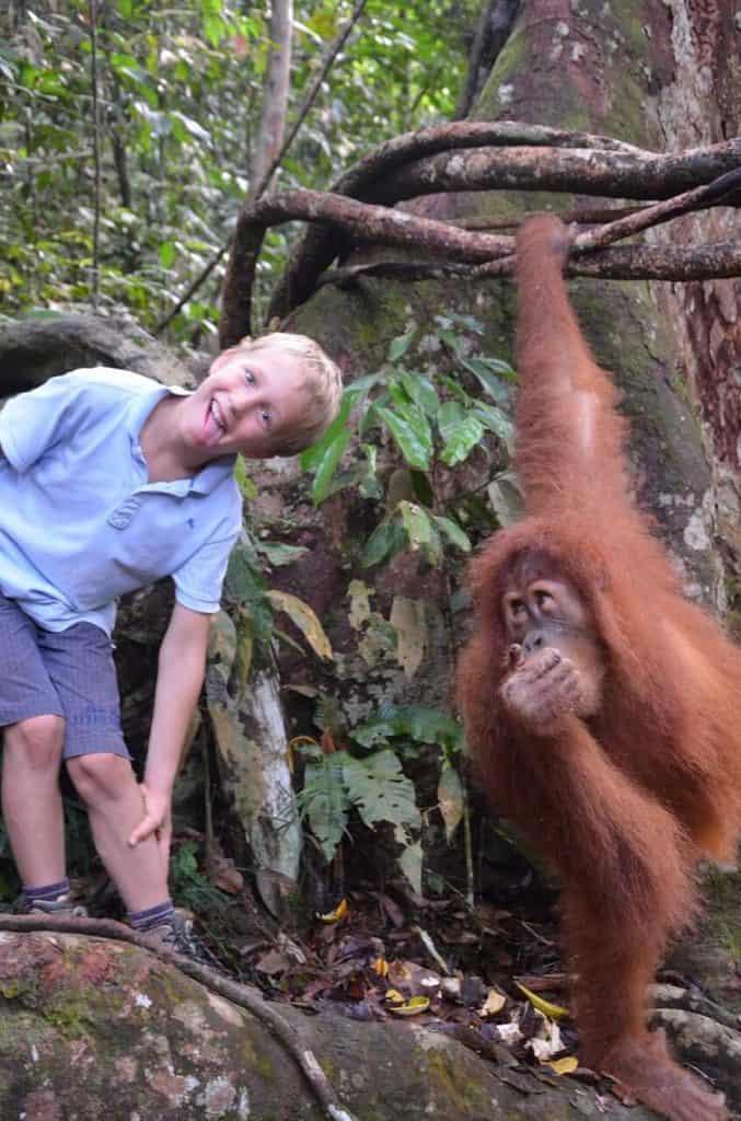 orang utan Sumatra parc naturel