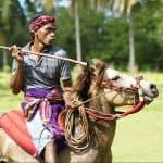 pasola sumba representation homme cheval