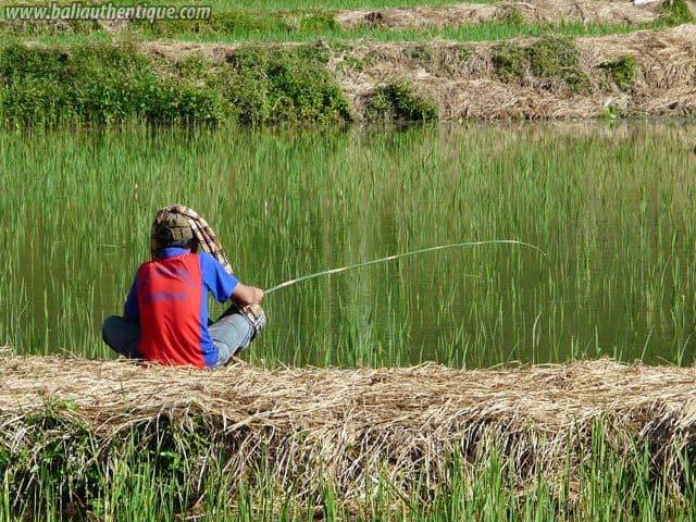 pays toraja sulawesi peche locale riziere