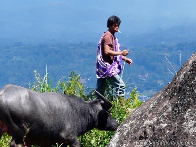 pays toraja sulawesi point de vue indonesie