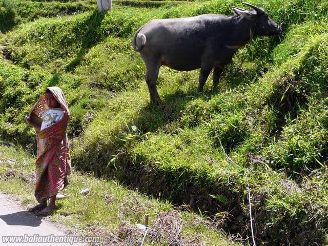 pays toraja sulawesi randonnées decouverte