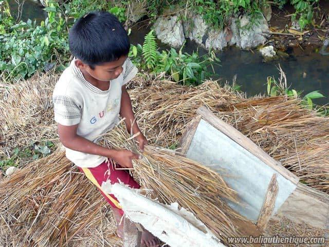 pays toraja sulawesi recole riz