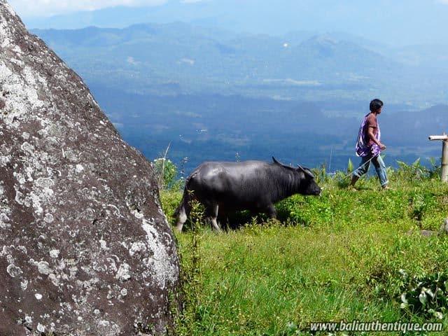pays toraja sulawesi vacances culturelles