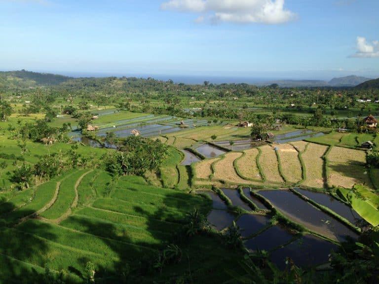 paysage rizières indonésie bali
