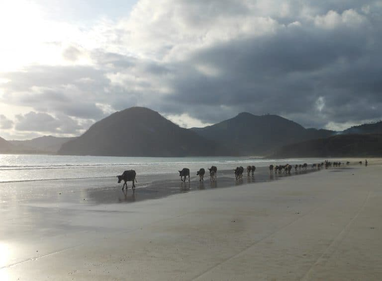 paysage majestueux ile de lombok