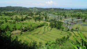 paysage panoramique rizières balinaises