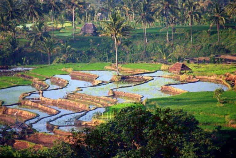 paysage culturel des rizières en terrasses