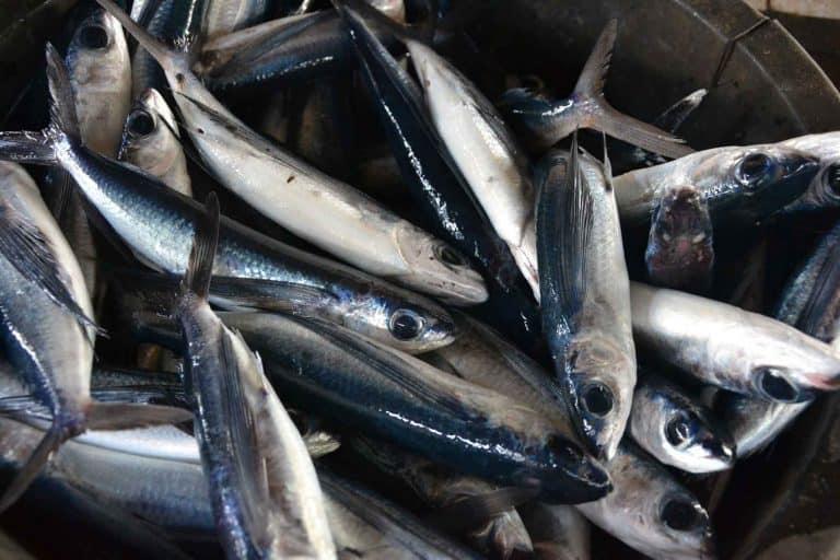 pêche bali marché poisson
