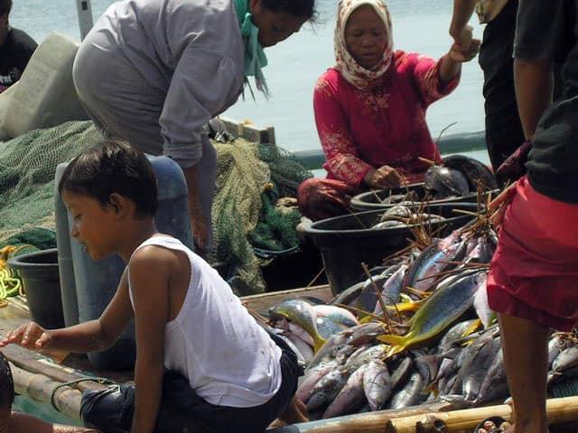 peche gili air ile lombok indonesie poissons bateau