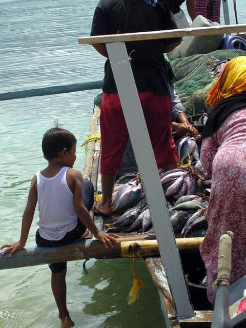 peche gili air ile lombok indonesie poissons filets