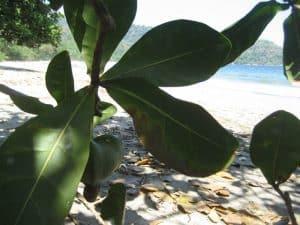 végétation plage déserte java