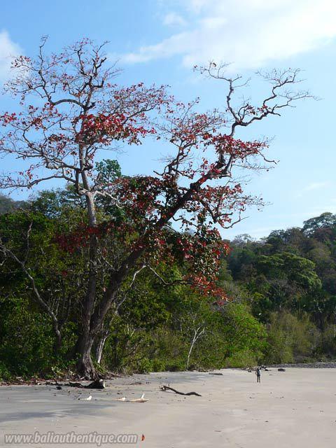 plage secrete java vegetation