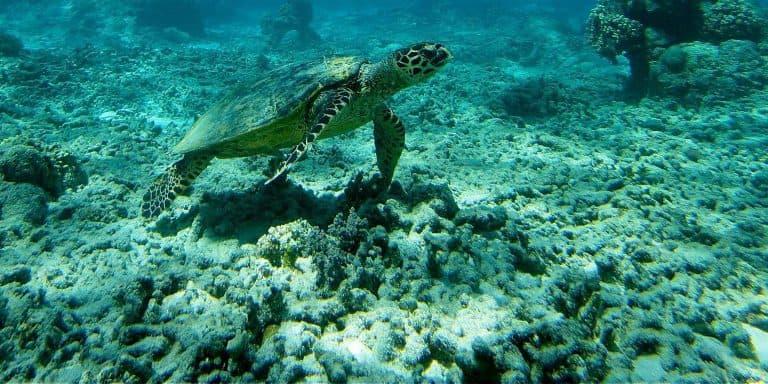 plongée sous marine ile gili