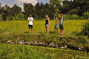 randonnées bali rizieres
