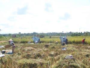 voyage à bali aventure rizières indonésie