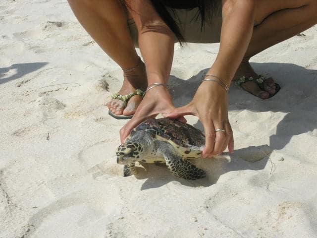 relacher tortue de mer gili meno ile lombok