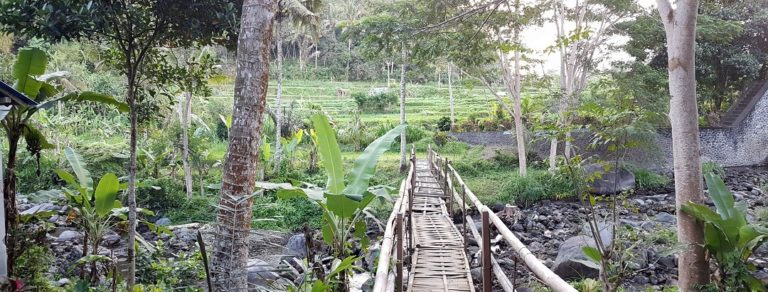 riviere pont bali nature
