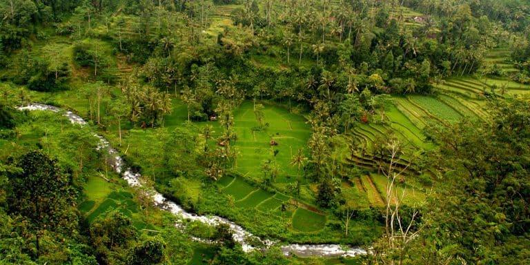 paysage rivière rizières bali indonésie rafting
