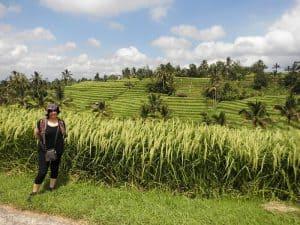 randonnées dans les rizières