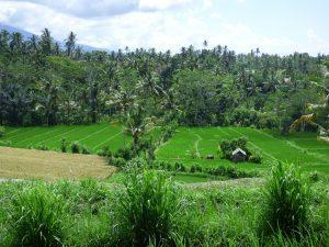 voyage organisé bali indonésie découvrir culture